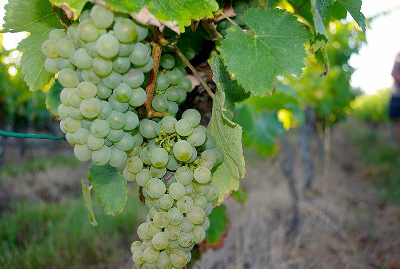 Cabane de vigne typique de la Touraine