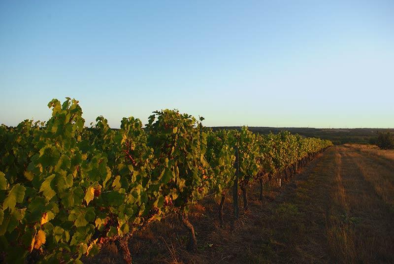 """Lieu dit cadastral """" La Calotte """", donnant sur la vallée de la Loire. Altitude 100 mètres."""
