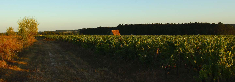 Loge de vigne typique de la Touraine